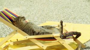 Katz im Liegestuhl